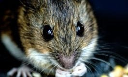 Mice Can Giggle and Sing – How Cute is That?!