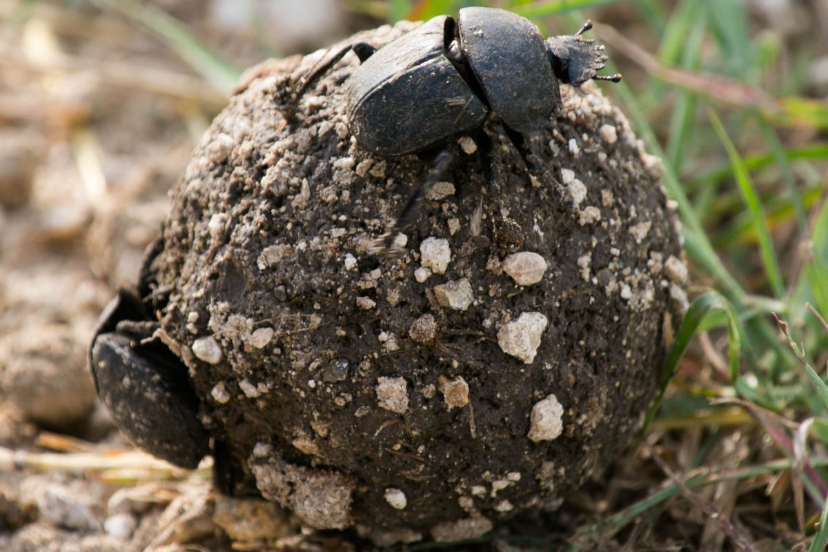 Scientists are Trying to Squeeze Energy from Poop