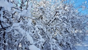 snow-1165463_1280