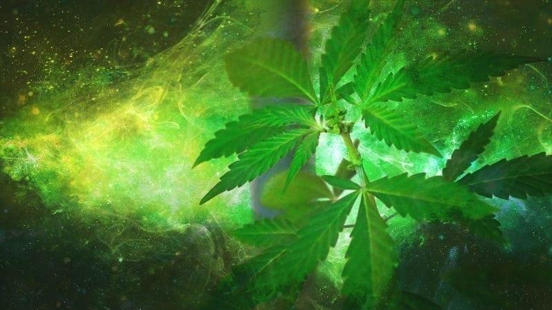 Dr. Mark Rosenfeld on the Medical Value of Cannabis