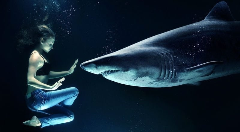 How Shark Week Affects Our View of Sharks