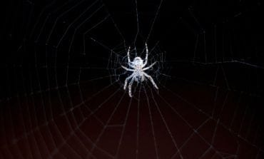 Friendly Neighborhood Spiders, Man