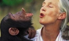 Celebs Reveal Why They're Inspired by Jane Goodall at Premiere of JANE