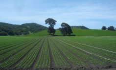 Salinas Valley and the Future of Farming