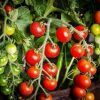 You Say Crypto, I Say Tomato: How Blockchain is Being Applied to Agriculture