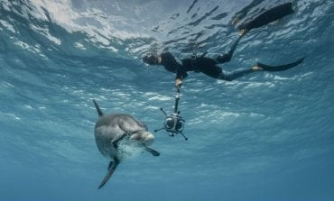 Deciphering Dolphins: Using VR to Uncover Their language