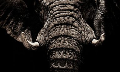 Tech Giants Take on the Ivory Trade