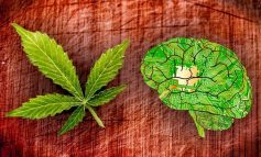 How THC Can Actually Improve Brain Health