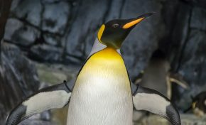 Quick Bytes: Giant Penguins, Stinky Genes, and Real World Pod Racing