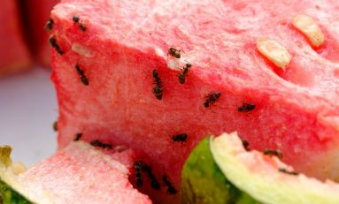 The Weekly Buffer: Eating Insects to Save the World