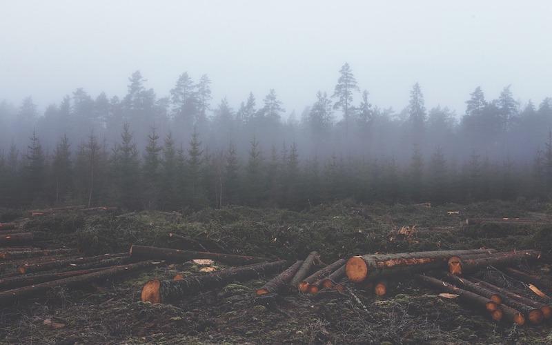 How Blockchain Can Help Reduce Deforestation