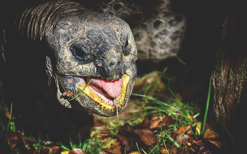 Game of Thrones' Dragon Noises Come from… Tortoise Sex?