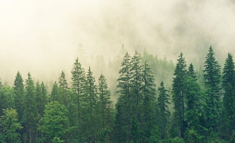 An Inside Look at the Technologies Protecting Our Nation's Forests
