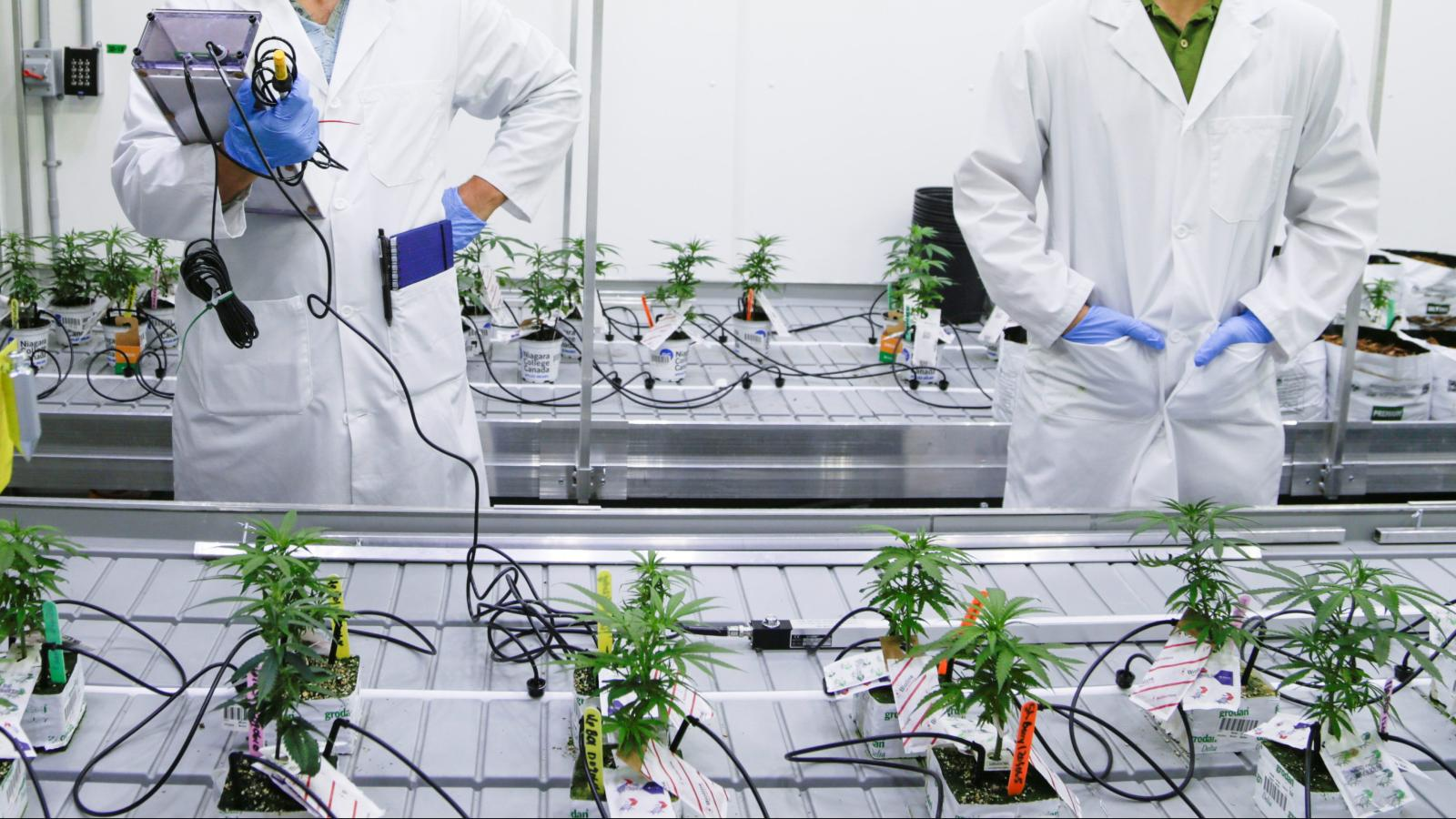 How Innovation in Grow Technology is Advancing the Cannabis Industry