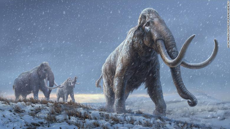 oldest-dna-mammoth-one-million-years-old-