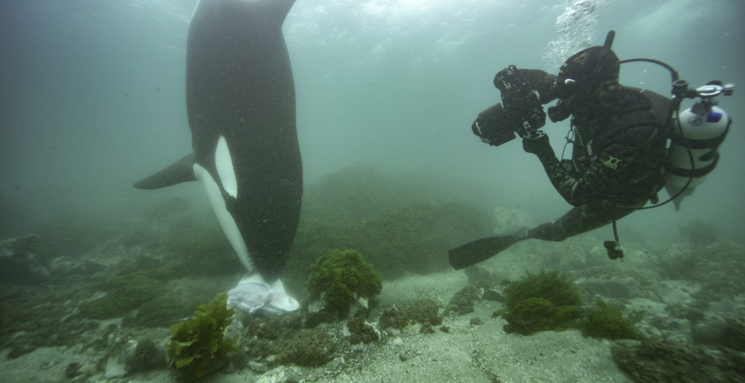 Secrets of the Whales Premieres Today — Our Chat with Producer Brian Skerry