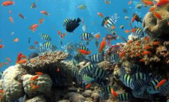 Watching A Coral Reef Die: Climate Change Devastates Tropical Island
