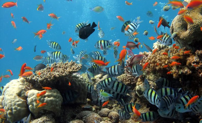 Watching A Coral Reef Die: Climate Change Devastates Tropical Island