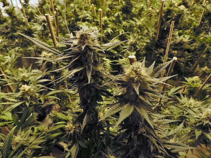 tree-plant-pot-green-produce-indoor-641108-pxhere.com
