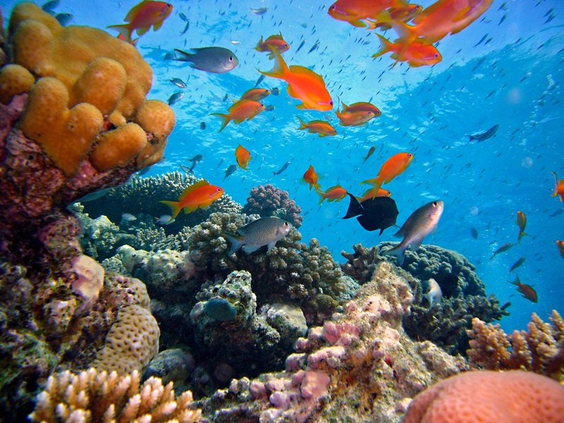 Coral Reef Restoration Technology May Reverse Climate Change Damage